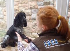 Canine treatment at The Wellness Centre (Castle Quay).