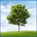 Tree Testimonial