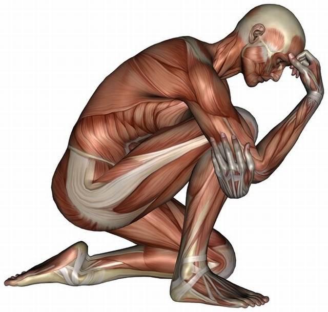 Kneeling muscle