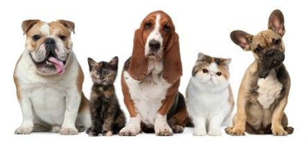 Chiropractor Orlando National Pet Week 2017