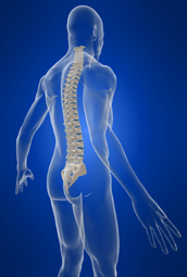 Our chiropractic techniques help keep your spine in alignment.