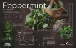 Peppermint Info