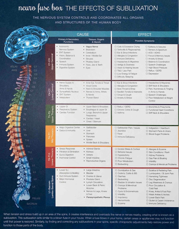 Adults and Pediatrics Nerve Chart