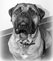 Damato Chiropractic Center Office Mascot, Moose
