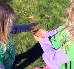 Four leaf clovers