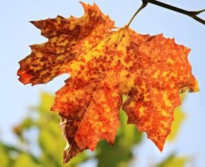 autumn-1638473_640