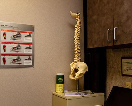 Model of spine in office