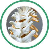 servicebanner-chiropractic