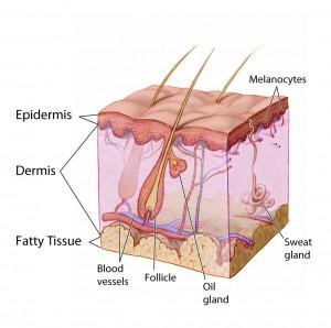 Skin graphic