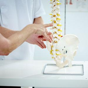 examining a spine model