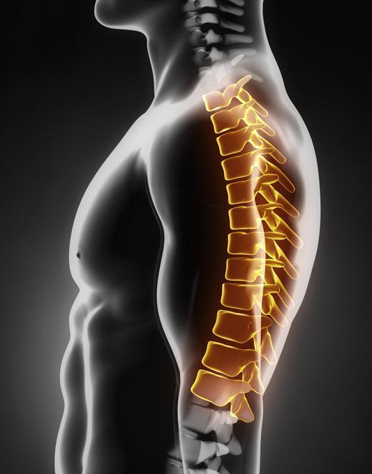 spine-illustration