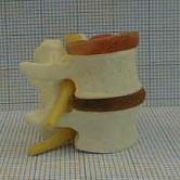 Spine 1
