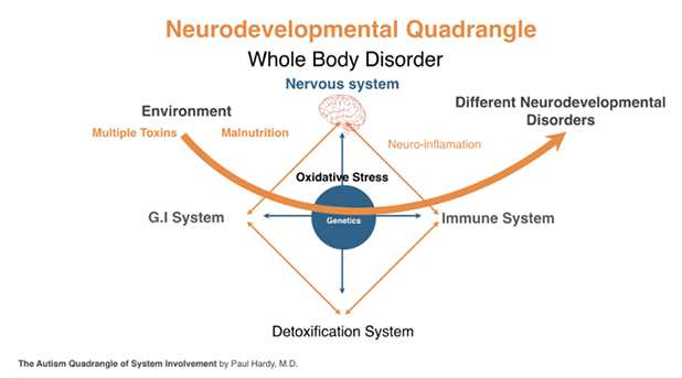 neurodevelopment-quadrangle