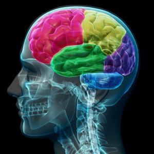 Brain memory 3