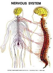 Nervous System Zone