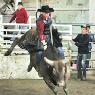 Steve D. Bull rider