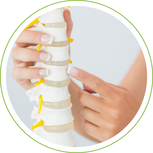 Hand pointing to spine model