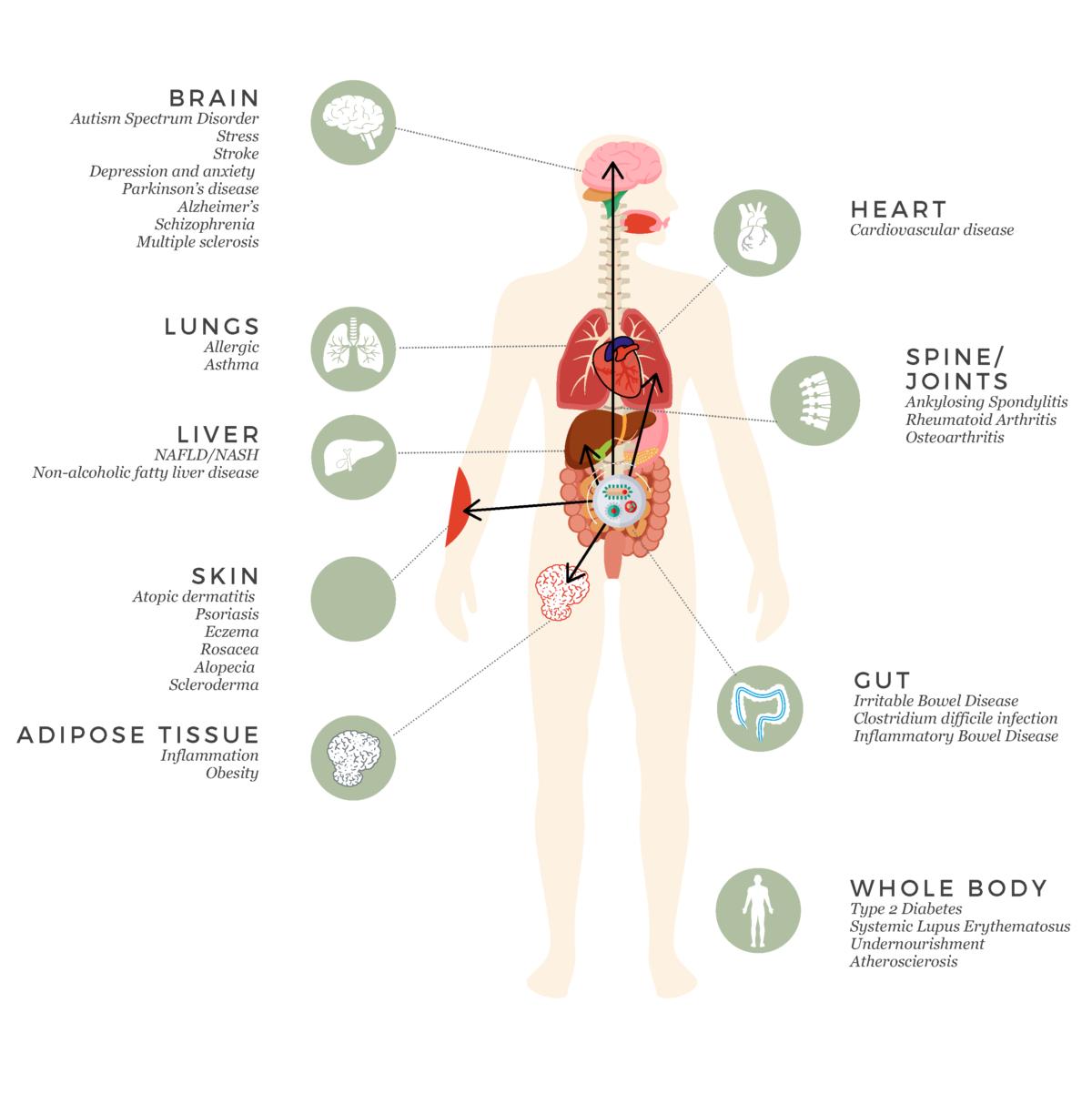 Gut and Microbiota illustration