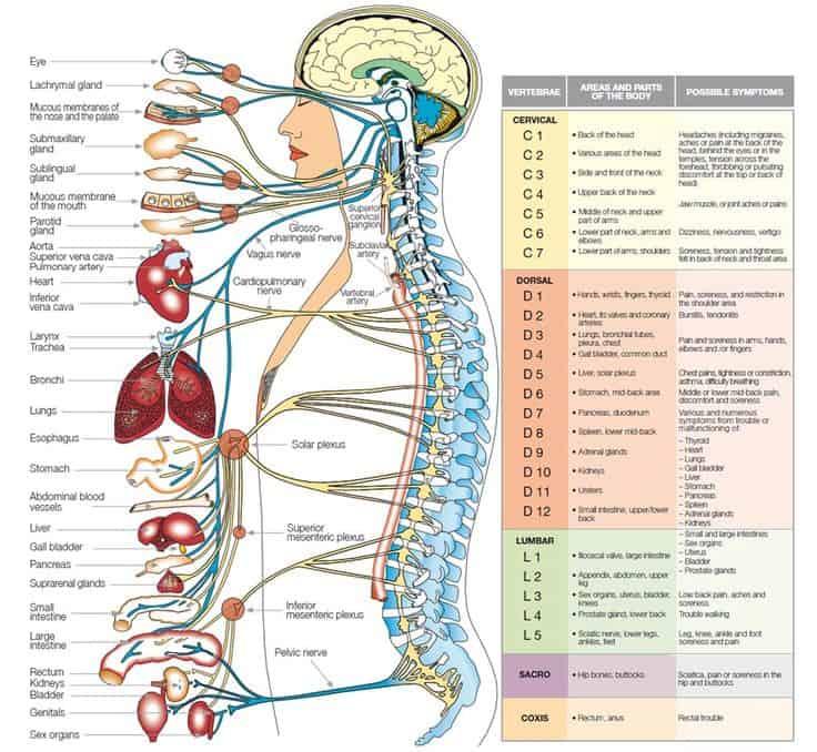 anatomy-organs-human-anatomy