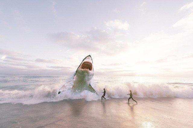 shark-3004153_640