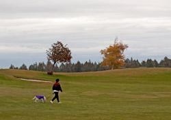 dog-walking-scenery