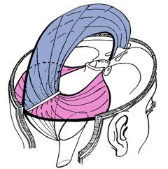 cranial-membrane