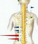 Muscle Balance (Symmetry)