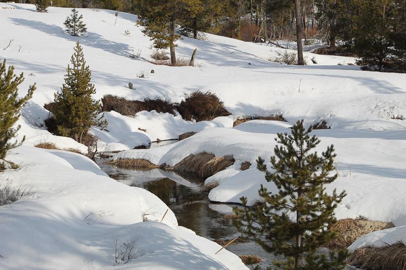 Creek Flowing Into Cascade Lake - Ken Swaim 3/7/21