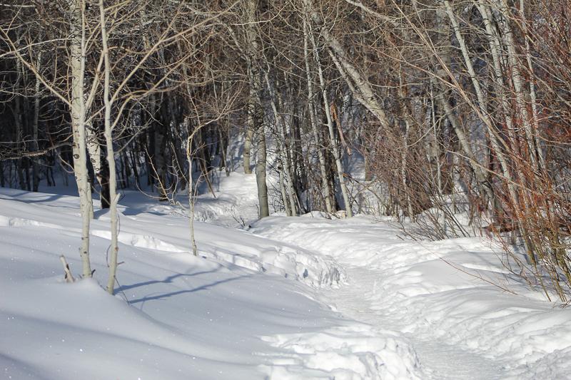 Morning Hike, Proctor Trail - Ken Swaim 3/7/21