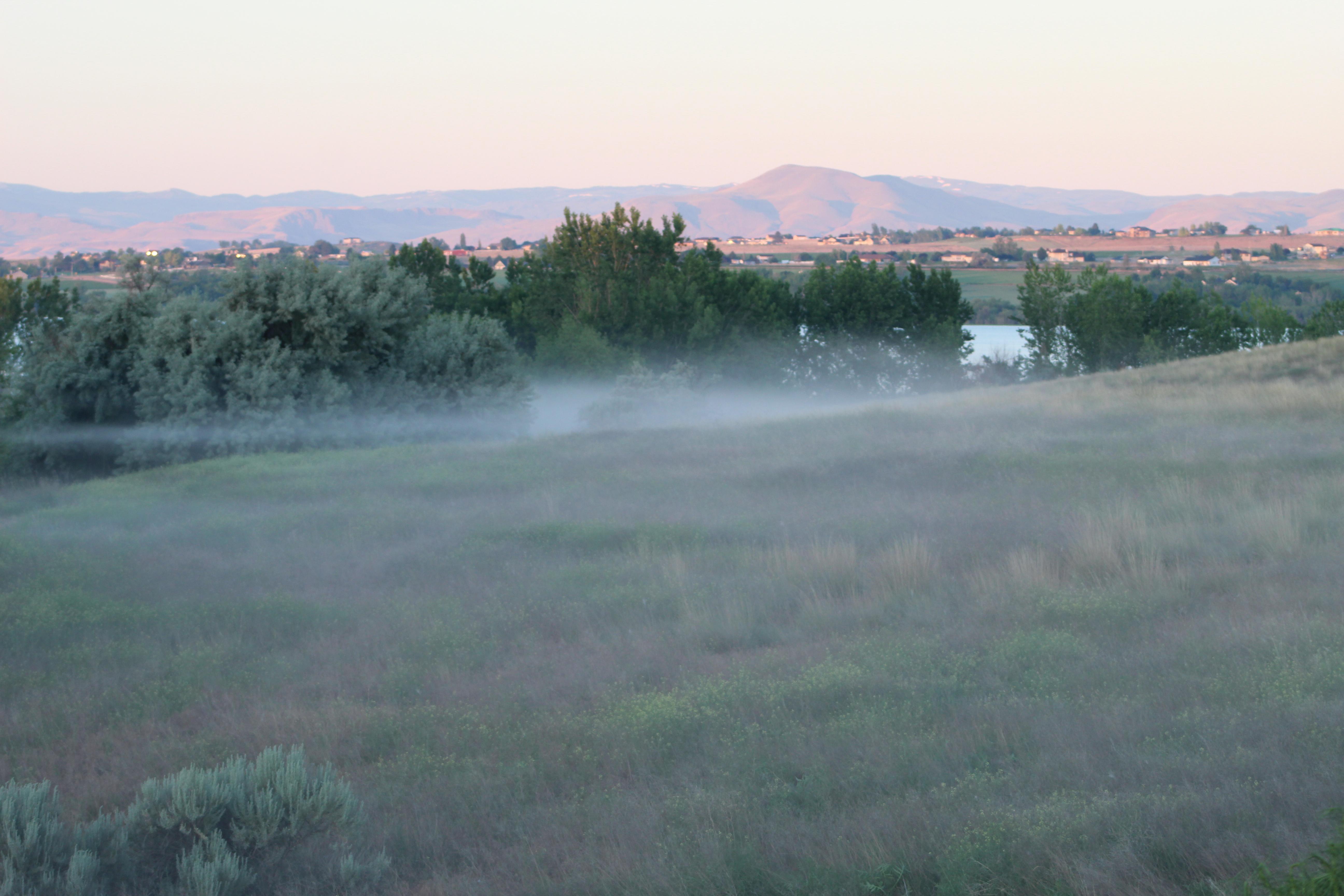 Spring Morning Fog - 6/11/20