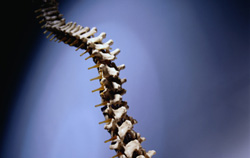 Curved spine