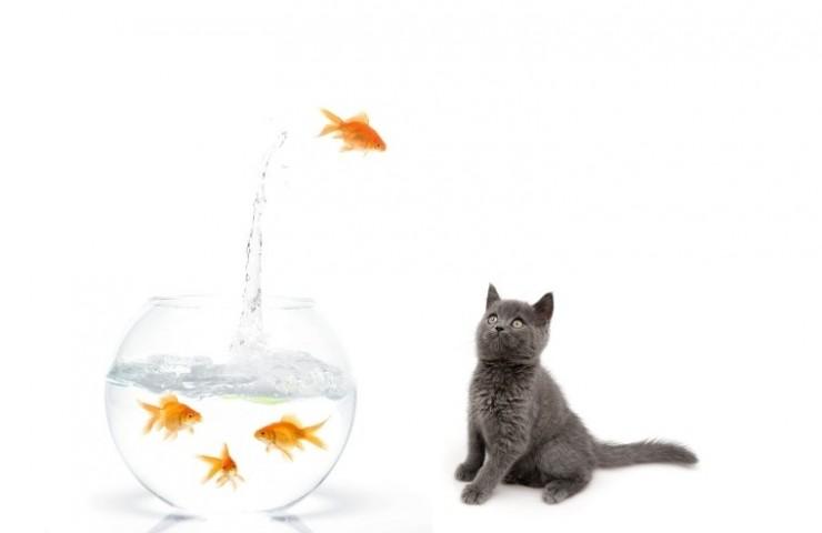 mistake-fish-jumping
